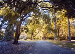 新西兰秋天自然风景图片(9张)