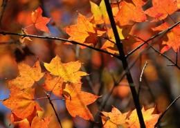 唯美而让人沉醉的秋季风景图片(10张)