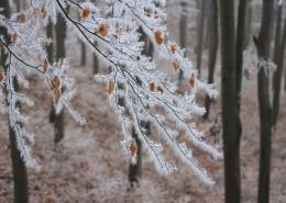 冬日树枝上的雾凇图片(11张)