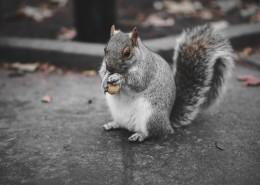 小巧可爱的松鼠图片(10张)