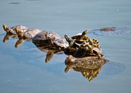 爬行缓慢的乌龟图片(12张)