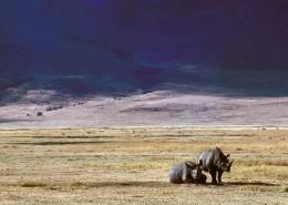 笨拙的犀牛图片(11张)