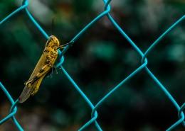 蟋蟀的特写图片(9张)