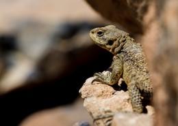 冷血爬虫蜥蜴的图片(10张)