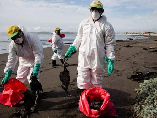 智利海滩现上千只鸟神秘死亡