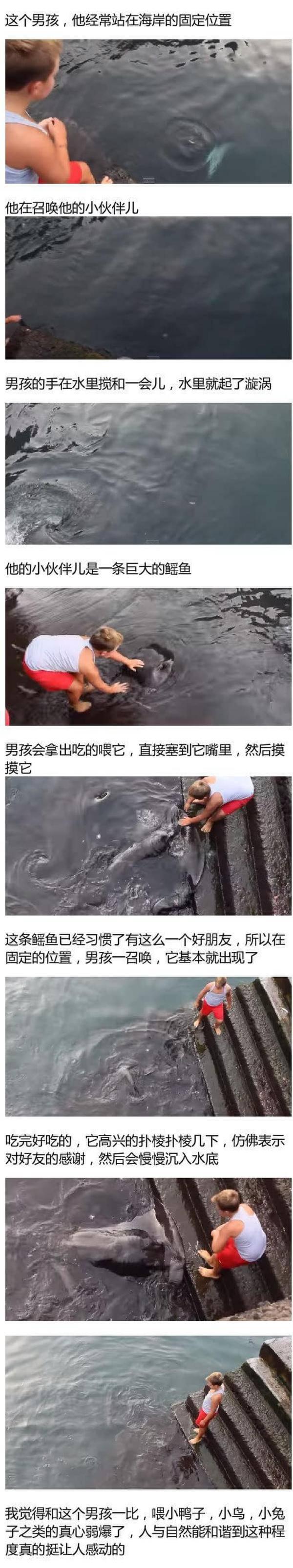 """男孩与鳐鱼成好友走红:""""神兽""""看呆网友"""