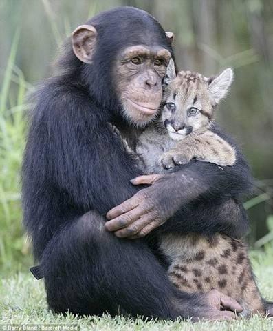 抱在一起的超萌可爱动物图片