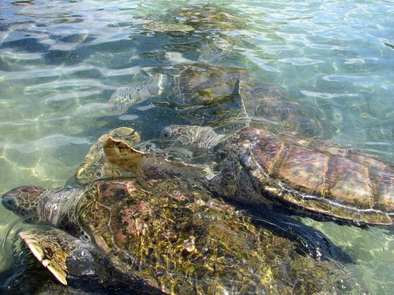 海洋里的海龟图片(13张)