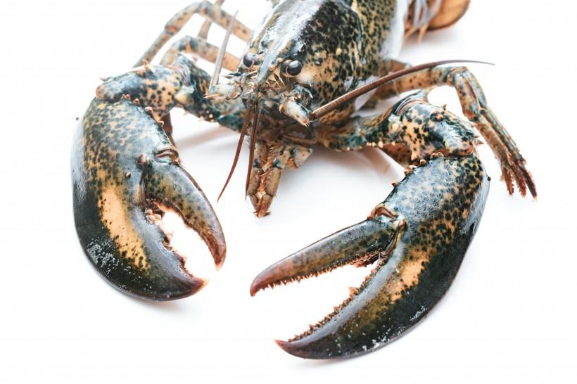 外壳坚硬的龙虾图片(9张)