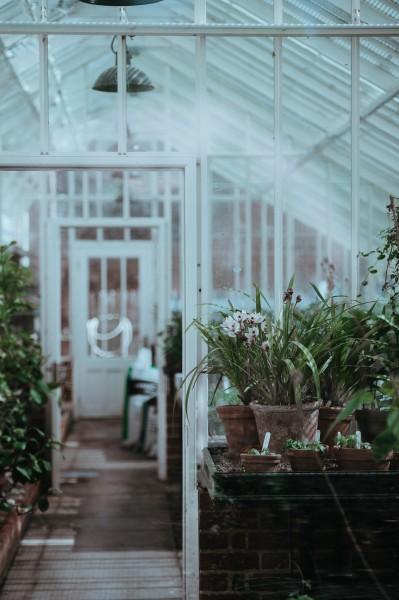 放在室内的盆栽图片(12张)