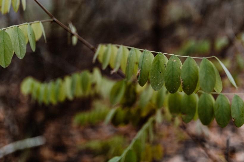 秋天森林的各个角落特写图片(12张)