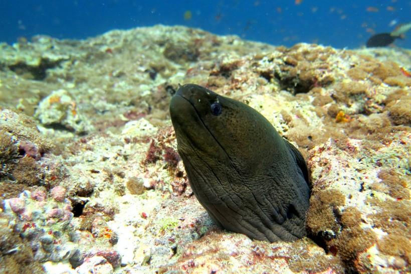 水里的鳗鱼图片(8张)