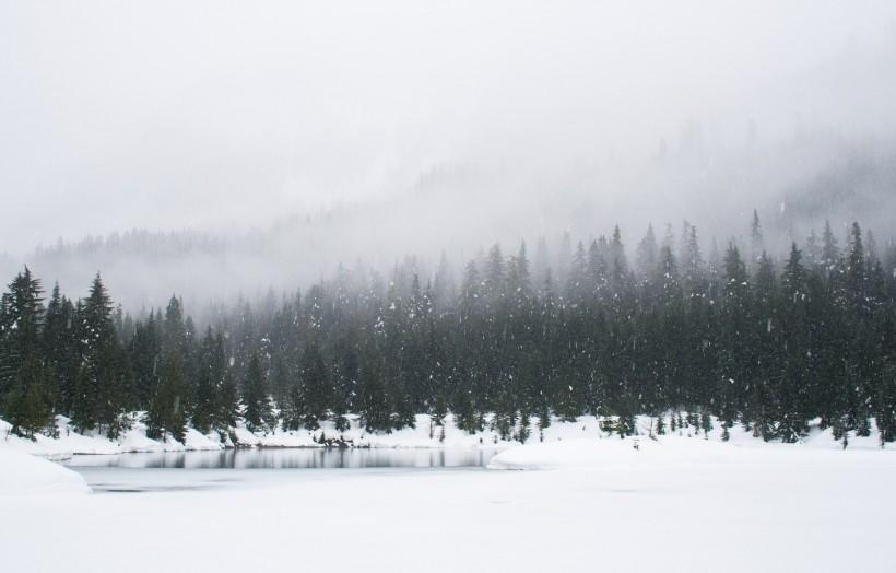 冬季的树林图片(11张)