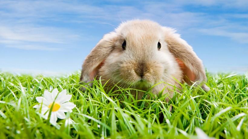 草地里的小兔子图片(8张)