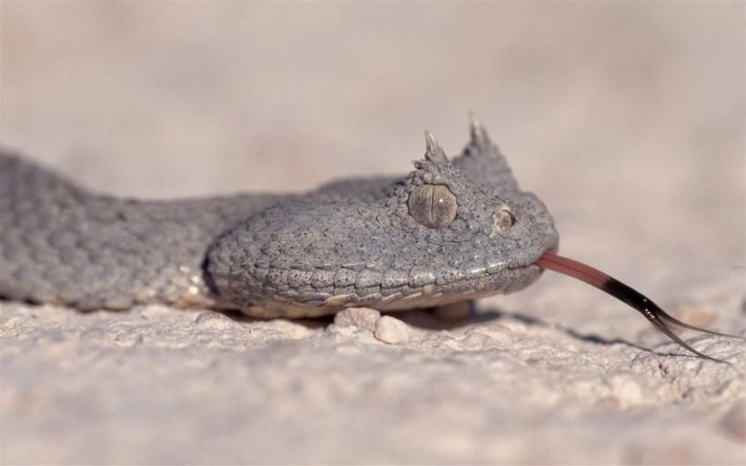 爬行动物蛇的图片(15张)