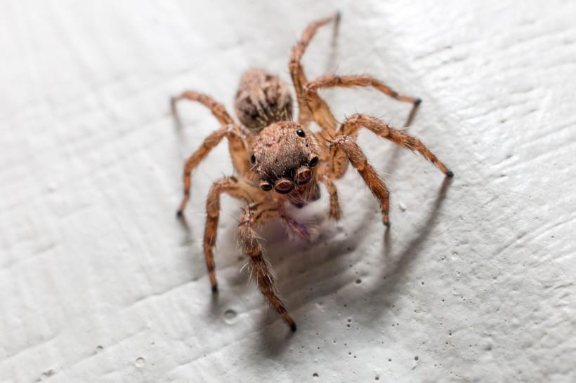蜘蛛高清图片(13张)
