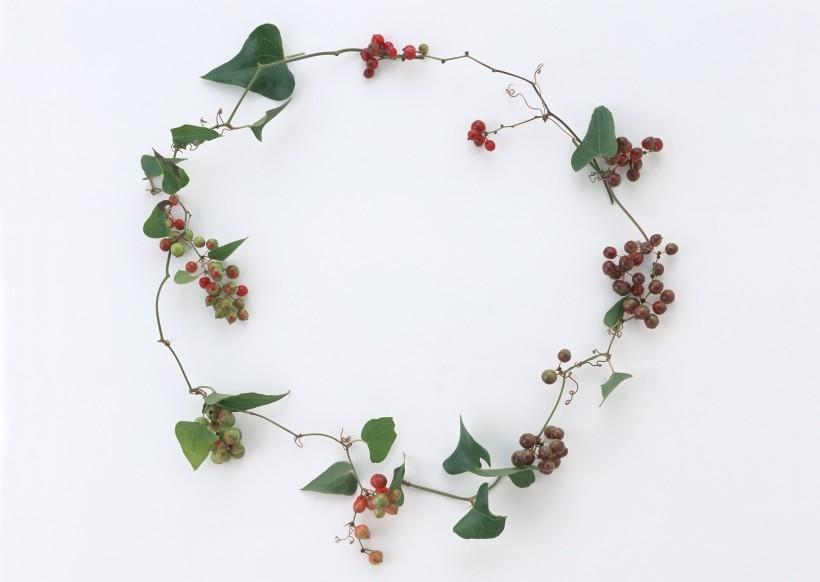 圣诞气息花草边框图片(10张)