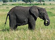 自然界野生动物组图合集