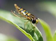蜗牛蜻蜓昆虫高清组图