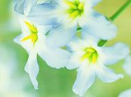 清新意境鲜花风景图片壁纸