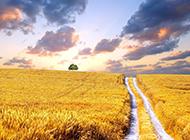 金色麦浪唯美风景图片大全