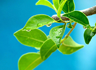 下雨天绿色养眼风景壁纸