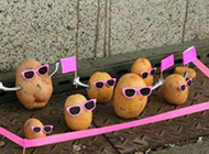 日光浴下萌萌小土豆创意图集