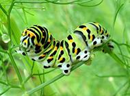 绿色昆虫高清特写的图片