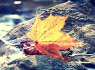 秋天风景美图唯美意境壁纸