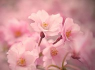 小清新养眼春天花卉高清壁纸