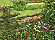 花卉草木绿色植被风景护眼壁纸