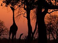 勇敢生存于大自然的动物高清图片