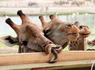 动物最新爆笑囧图图片