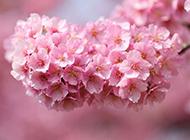 小清新花卉植物高清桌面壁纸