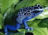 有趣的动物世界高清图片欣赏