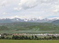 春天草原的绿色景图片特写
