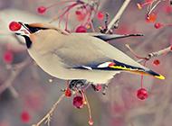 浪漫初春高清森林鸟类壁纸