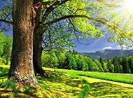 树林风景壁纸优美迷人
