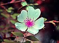 春天里生机勃勃的植物高清图片
