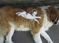 可爱猫咪图片搞笑精选之柔软的大床
