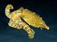 海底动物特写海底世界