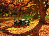 美丽的公园风景壁纸赏析