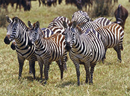 自然界野生动物高清图片