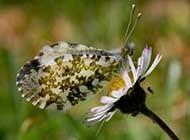 美丽飞舞的蝴蝶高清桌面壁纸