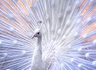 可爱机灵的鸟儿高清壁纸精选