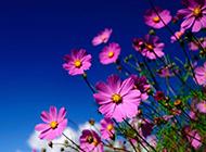 鲜花小清新唯美风景图壁纸
