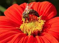 精美世界 蜂花之恋