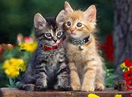 萌宠猫咪可爱抓拍瞬间