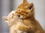 萌猫咪恶搞图片之宝贝亲一口