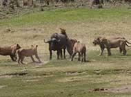 动物们的战斗场景